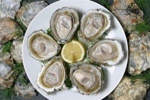 Bluff Oyster Food