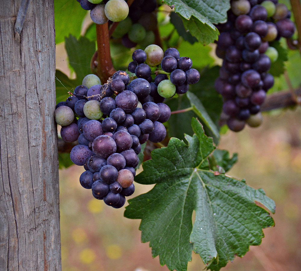 Food und Wine Tour durch Neuseeland