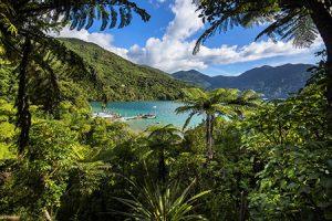 Punga Cove Marlborough Sounds