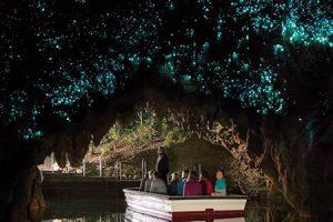 Glühwürmchen Höhlen Waitomo