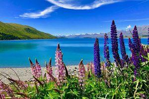 Lake Tekapo Neuseeland hautnah erleben