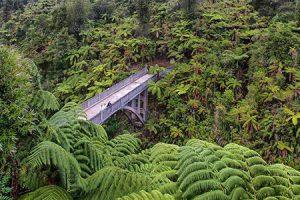 Naturkundliche Reise Whanganui