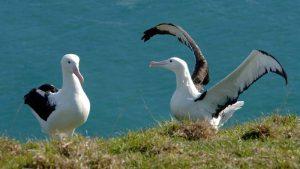 Naturwunder Albatross