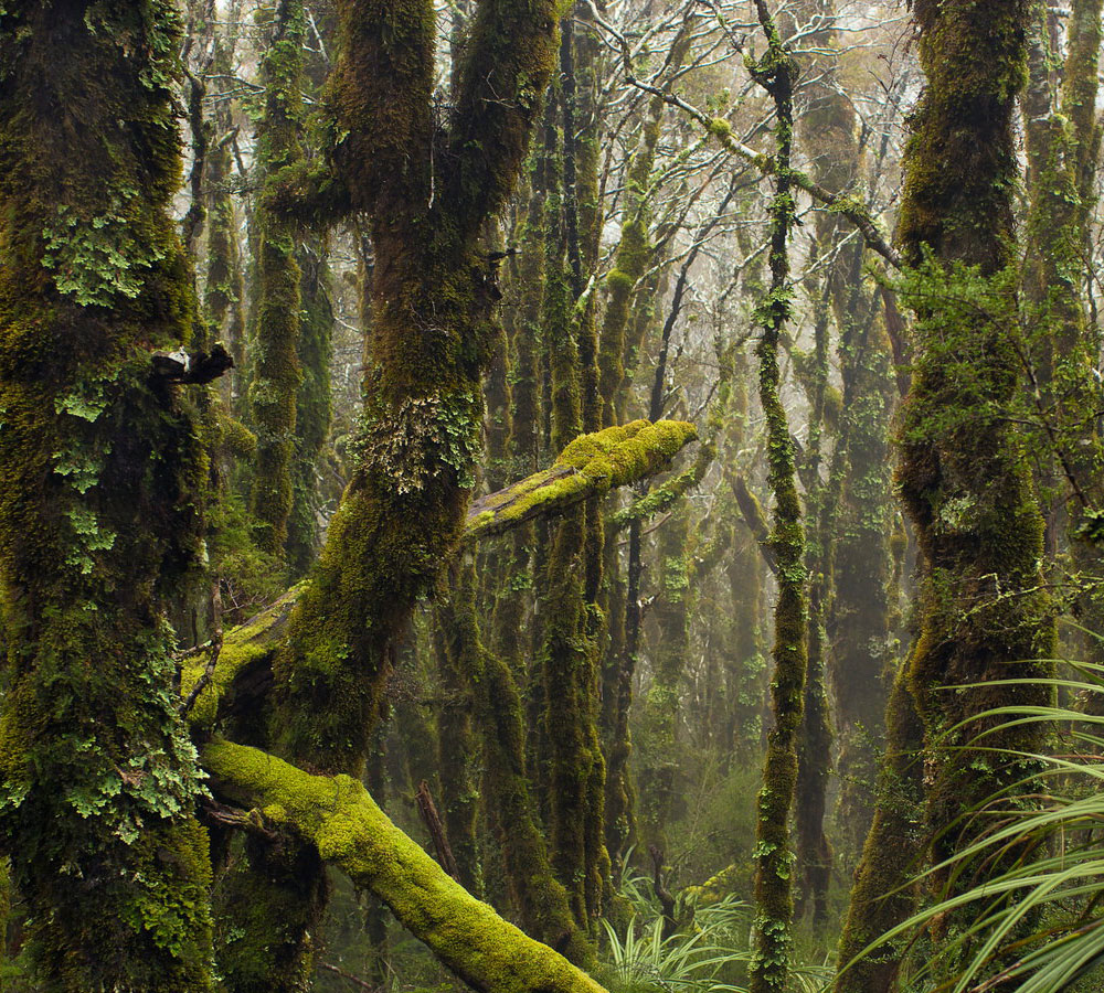 Naturwunder Regenwald Neuseeland