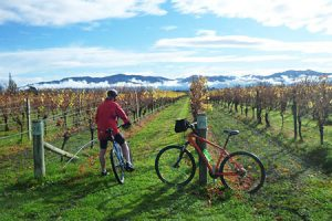 Food and Wine Tour durch Neuseeland